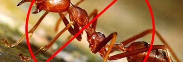Phun, diệt kiến, diệt gián, diệt muỗi