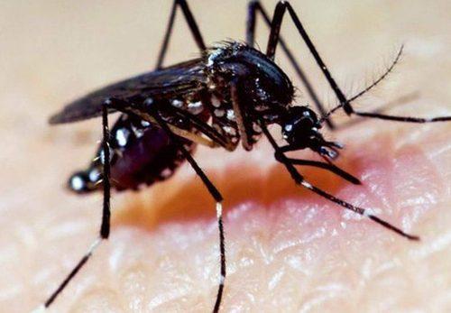 Loài muỗi ở Việt Nam