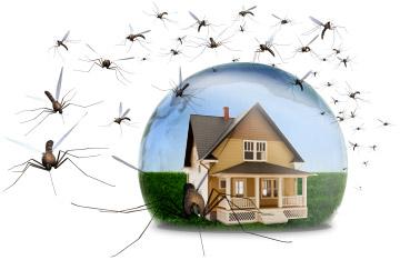 cách diệt côn trùng