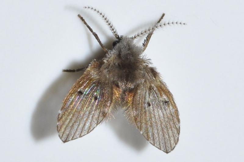 Diệt côn trùng ruồi bướm
